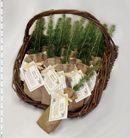 Image from - https://www.brit.co/plant-wedding-favors-for-your-greenery-themed-wedding/?crlt.pid=camp.8jGFI6kW5Oi8
